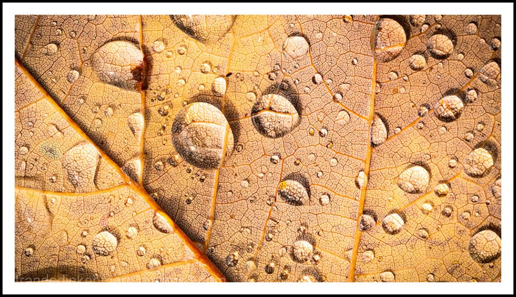 leafscape
