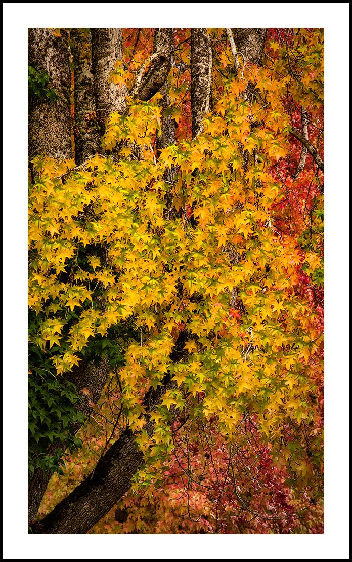 Legions of Leaves