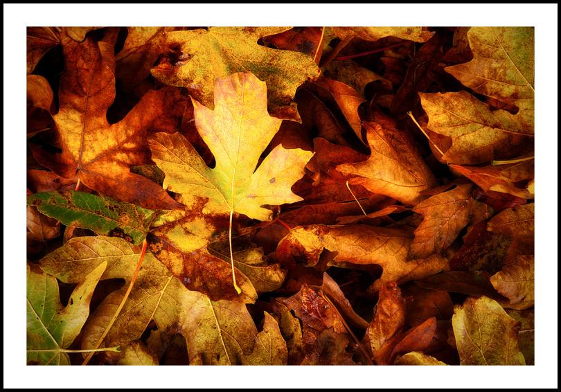 autumnal blacket