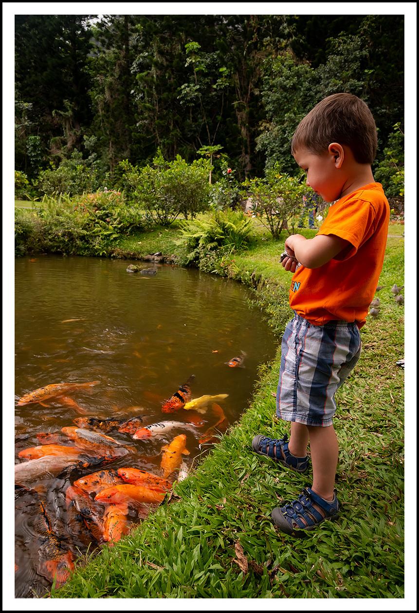 Feeding Fishy