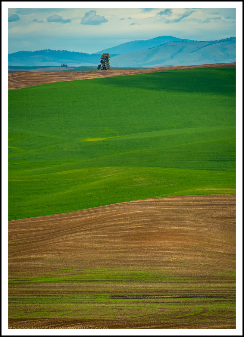 Kamiak Butte View