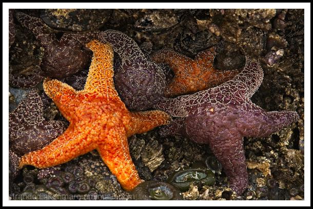 Starfishy!!!