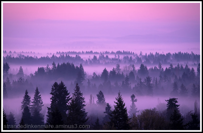 Misty Morning Romp
