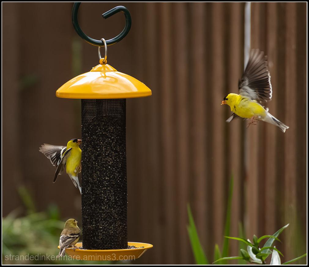 feeder action