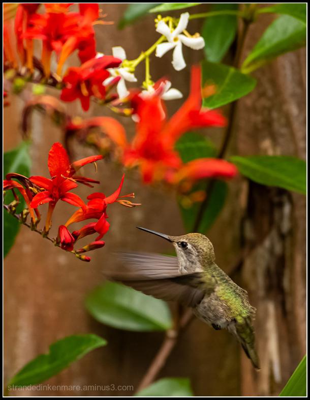 nectar gazing