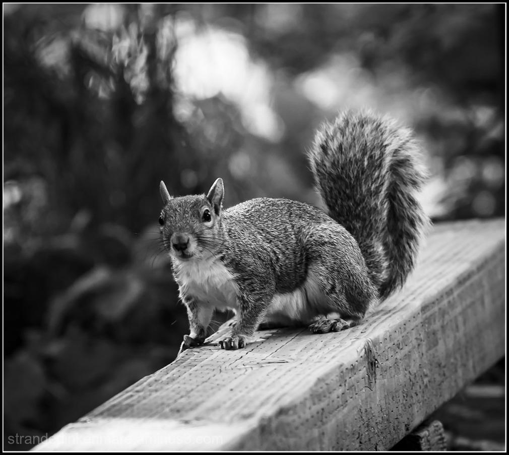 an inquisitive rodent