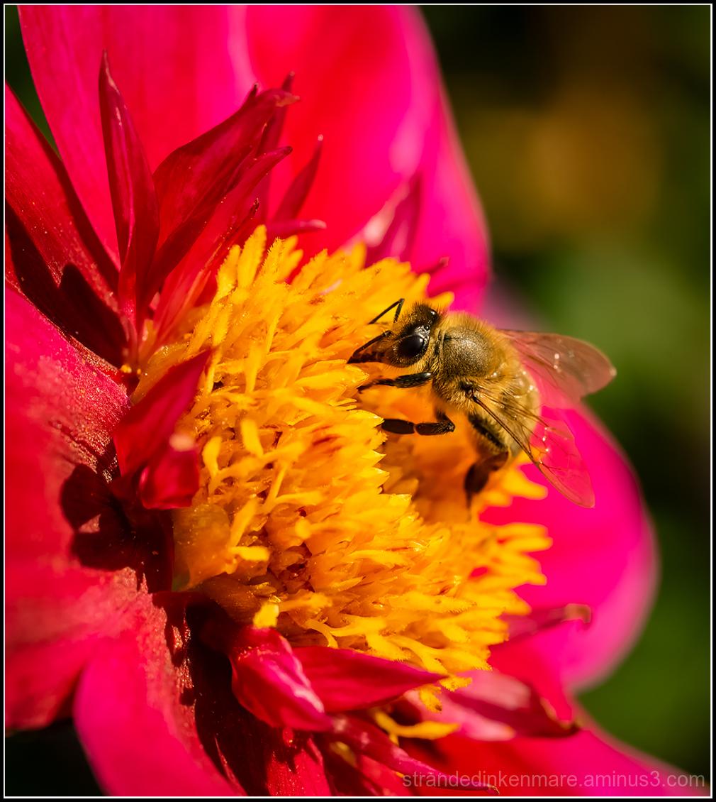 busy buzzer