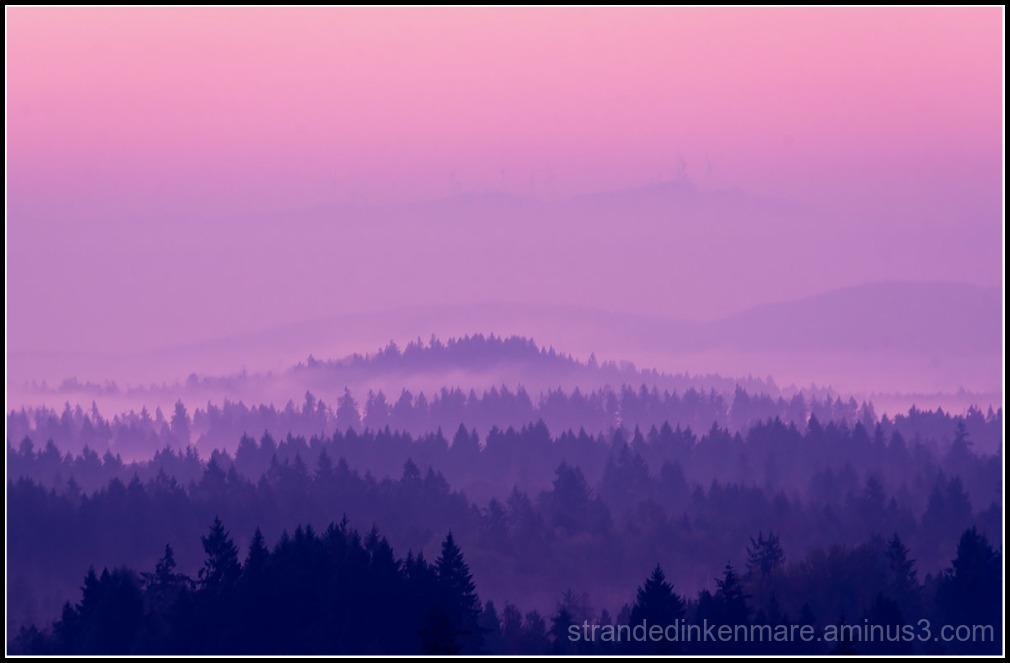 shrouded in mist