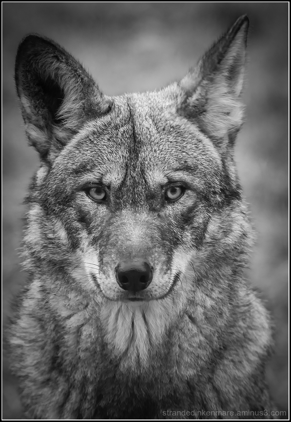 Wulf the Red