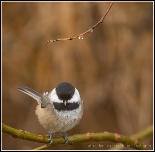 Hungry Beak