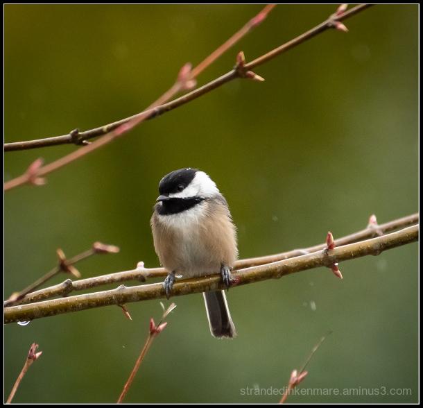 Rainy Day Bird