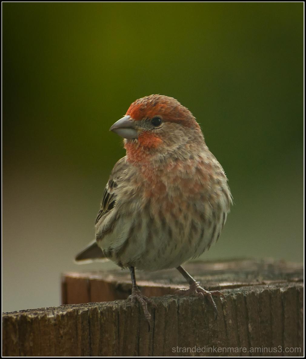 FinchBLoke