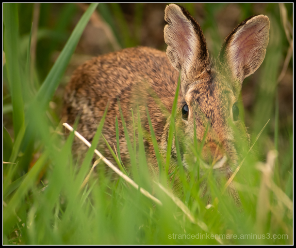 crouching dragon, hidden bunny