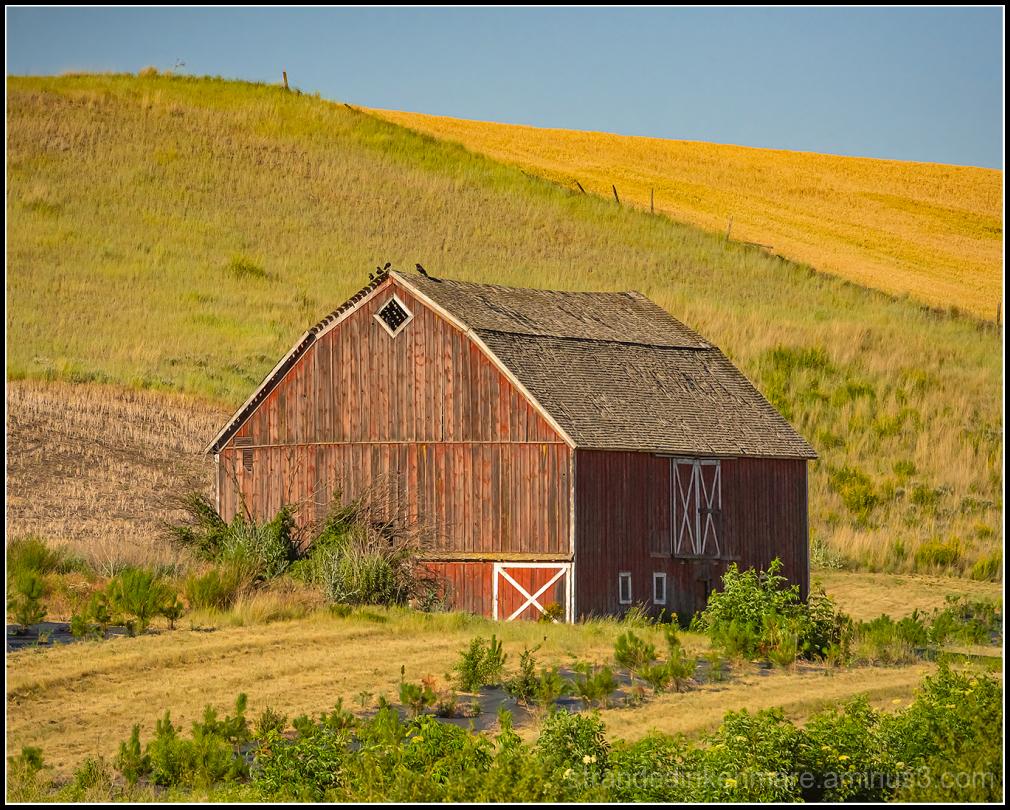 Barn Near St. John, WA