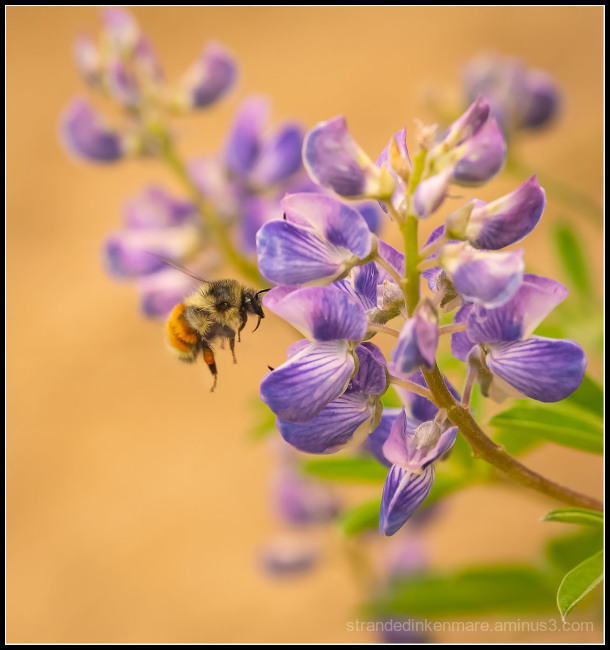 buzzzy