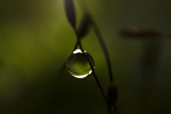 drop, leaf, green,