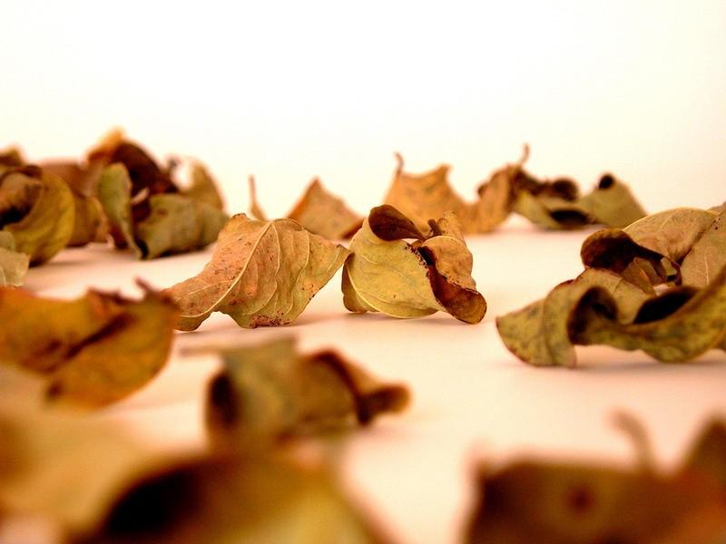 Autumn leaves #03
