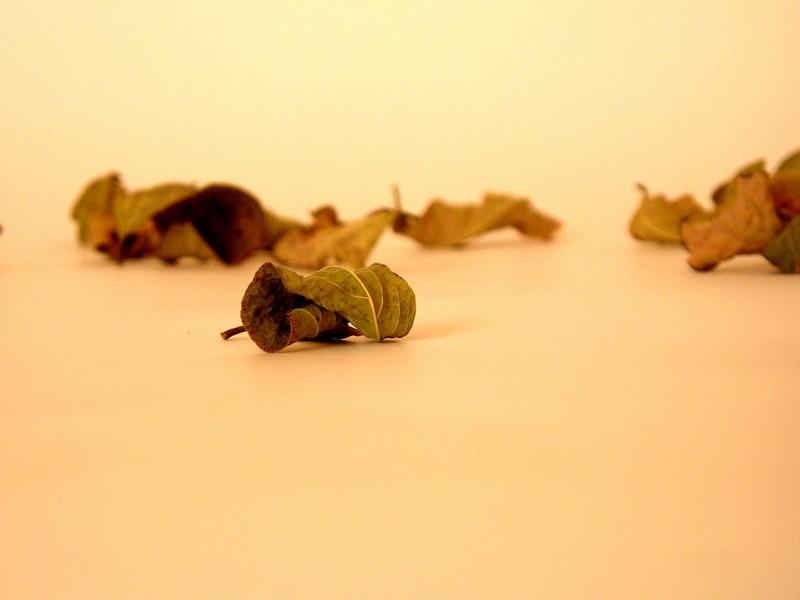 Autumn leaves #02