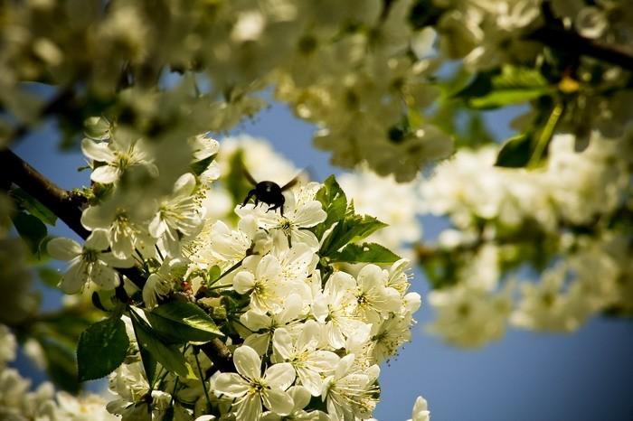 Spring #04