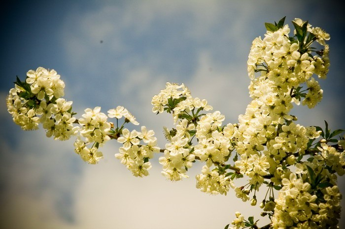 Spring #07
