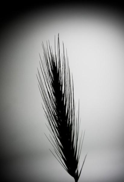 [ simplicity ] #4