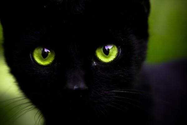 [ green eyes ]