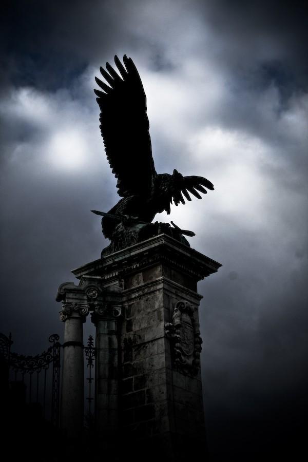 dark bird above budapest