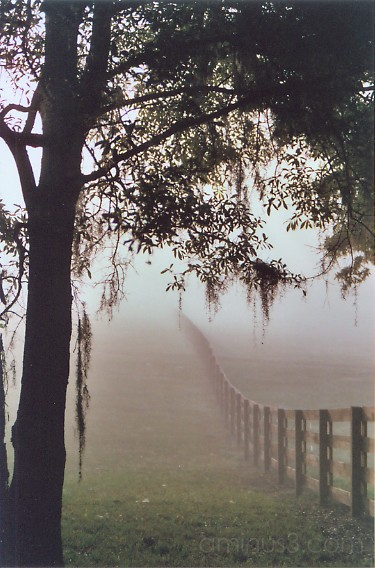 a foggy fenceline