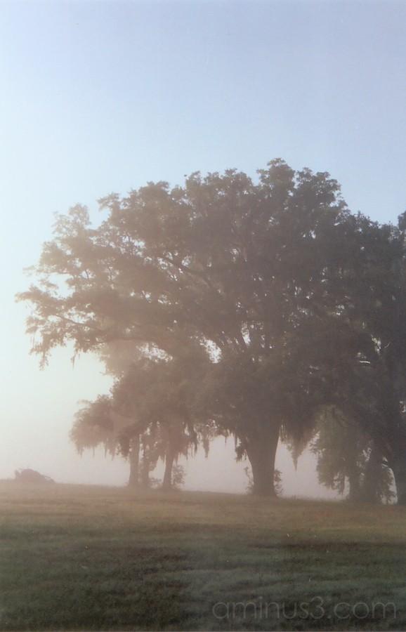 more fog....