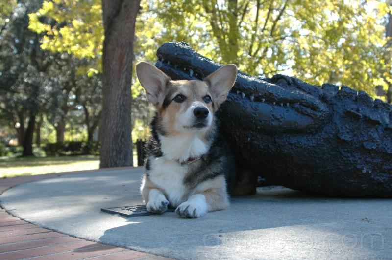 Sadie and the Gator