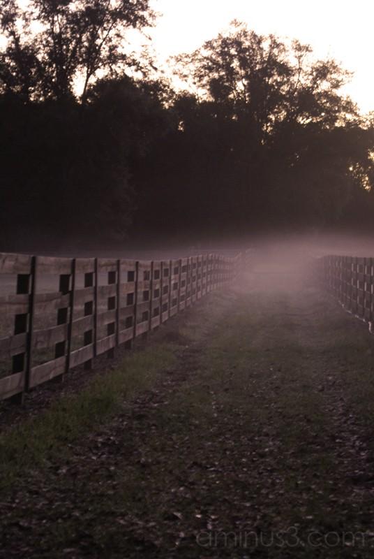 fence #3