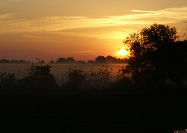 morning on the farm #6