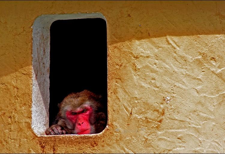 zoo Lisbon