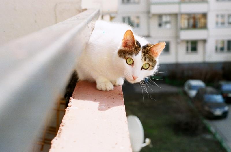 Tosser cat on my balcony