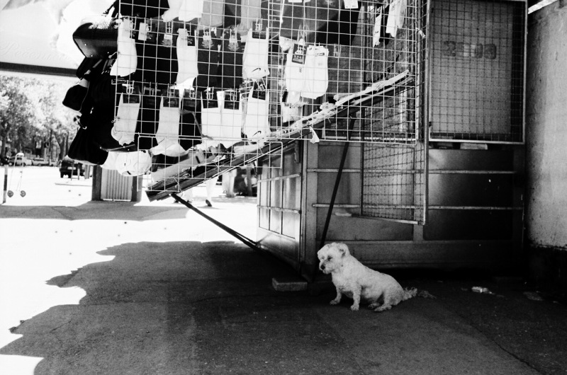 Dog in Beograd