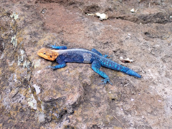 A lizard that made me look twice.