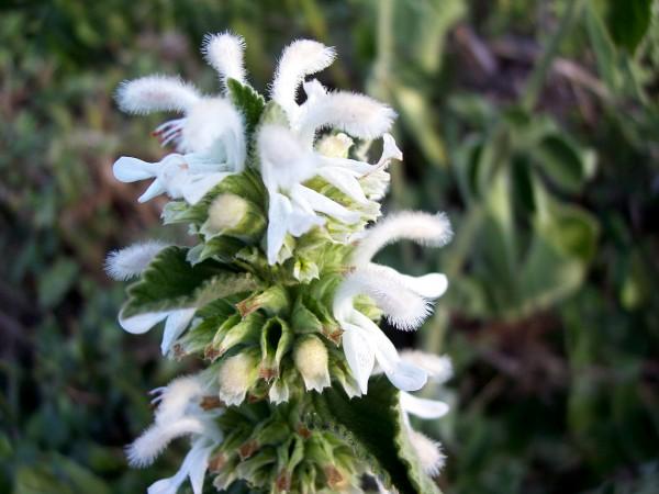 A white flower found in Africa.