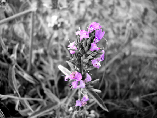 A beautiful purple plant.