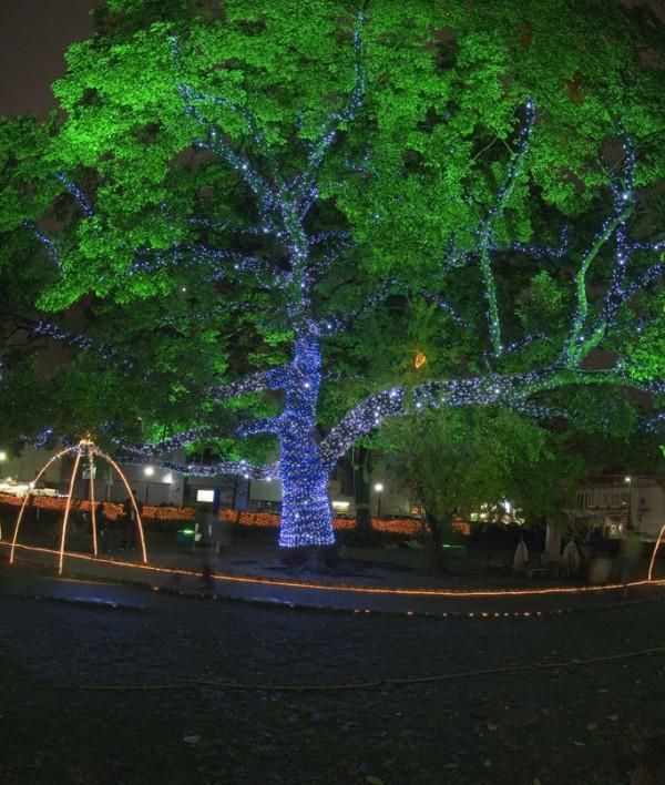 Holiday lights in Hiroshima.