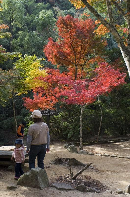 Fall colors at Miyajima.