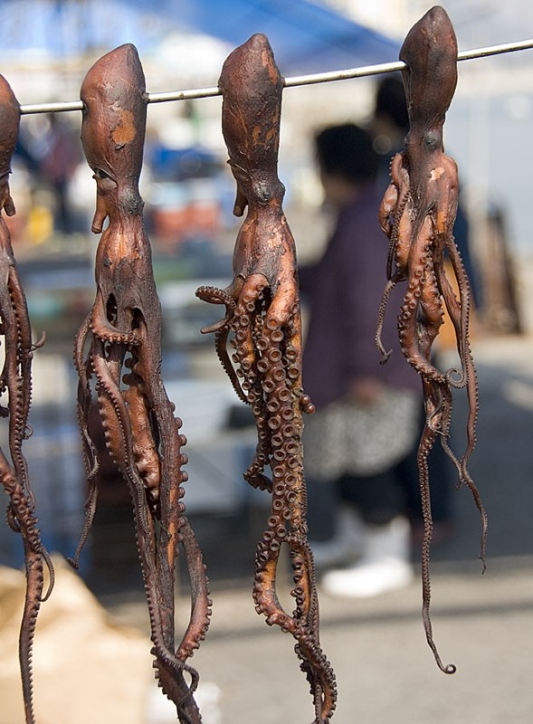 Octopus drying in the sun.