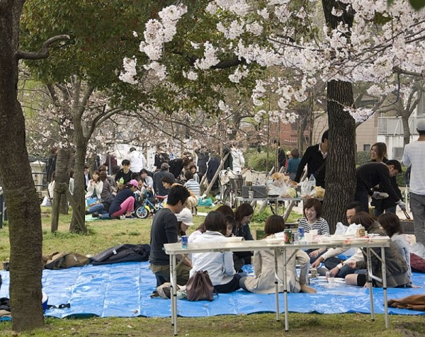 People viewing cherry blossoms.