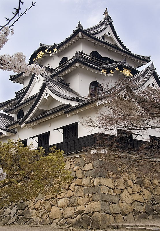 Hikone castle at 400 years old.