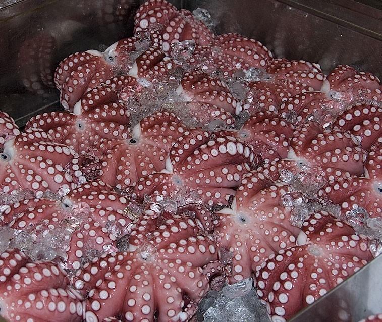Octopus on ice.