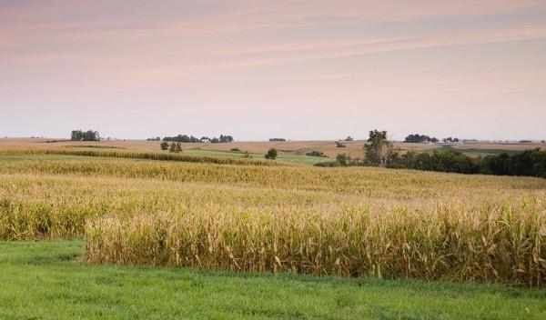 Dawn breaks over rural Iowa field.