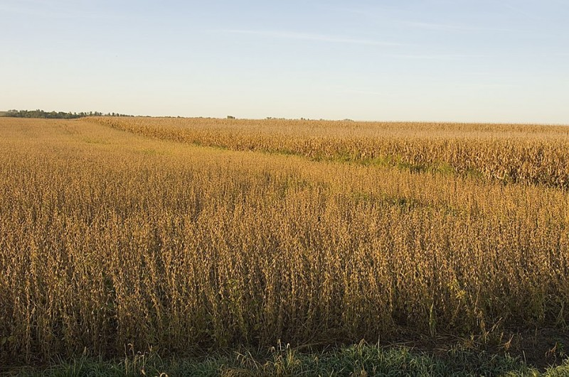 Grain crops from the farm belt feed the world.