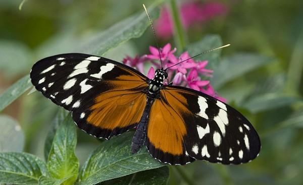 A butterfly on a flower.