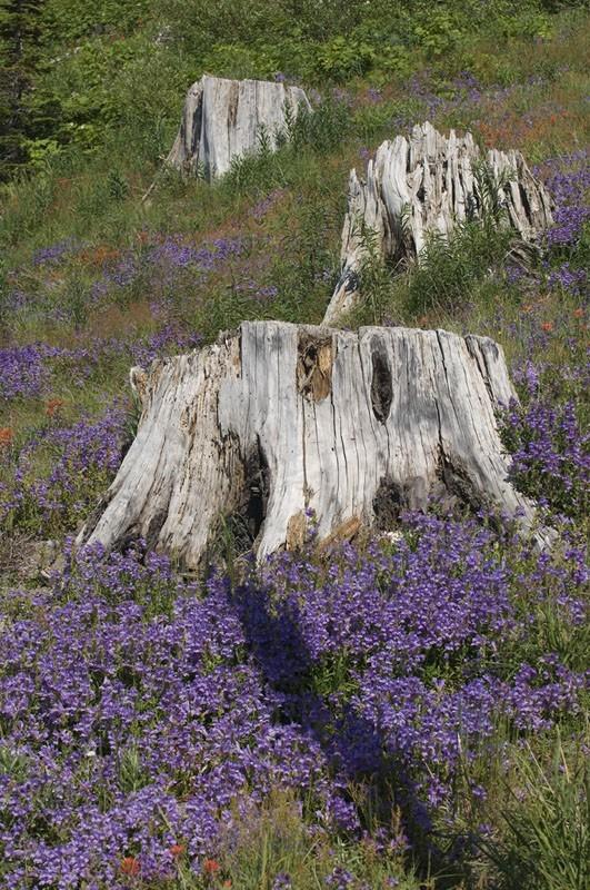 Flowers and three tree stumps.