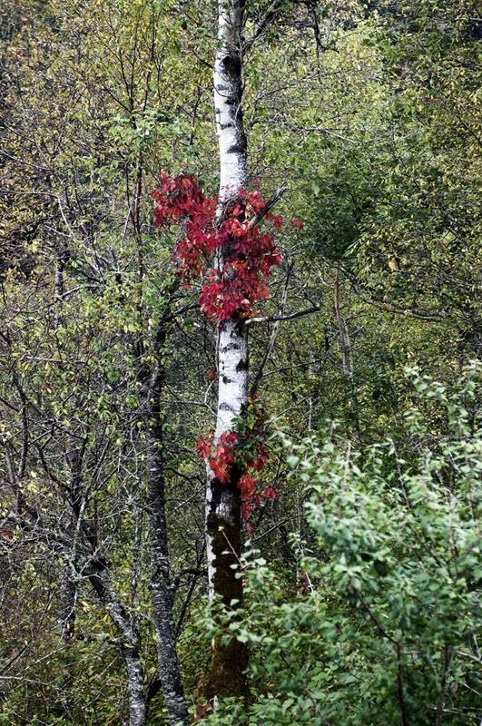 A tree in fall.