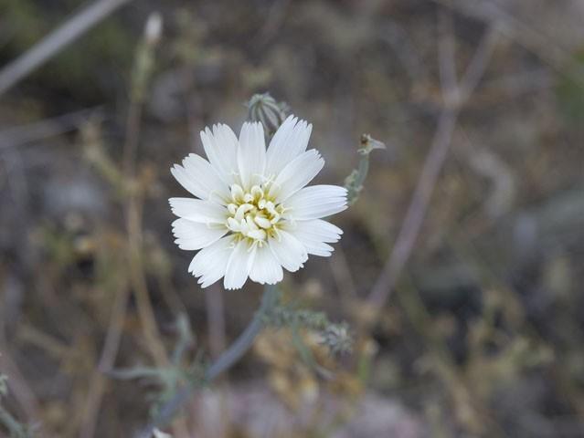 A dessert flower.